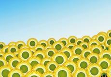 Sunflower Field illustration. Illustration of Sunflower field under blue sky Royalty Free Stock Photo