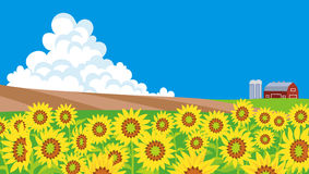 Sunflower field Landscape.  Royalty Free Stock Photo