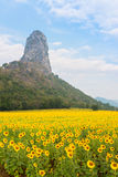 Sunflower field over cloudy blue sky and bright sun lights Stock Photography