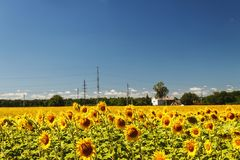 Sunflower field over cloudy blue sky and bright sun lights. Summ. Er landscape, house in a field of sunflowers Stock Images