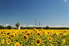 Sunflower field over cloudy blue sky and bright sun lights. Summ. Er landscape, house in a field of sunflowers Royalty Free Stock Photography