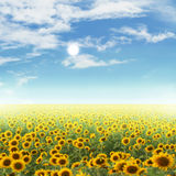 Sunflower field and sky at sun the day background. Royalty Free Stock Photos