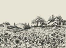 Sunflower field. Sunflower harvest field, hand drawing Royalty Free Stock Photos