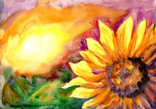 Sunflower field in time sunset. Watercolor painting. Sunflower field in time sunset Royalty Free Stock Images