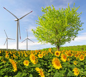 Sunflower field with tree and wind turbines Royalty Free Stock Photography