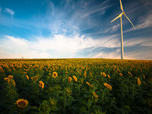Sunflower Field With Wind Mill during Daytime Stock Photo