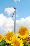 Sunflower field with wind turbine. Royalty Free Stock Images