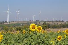 Sunflower field wind turbine Royalty Free Stock Photos