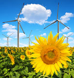Sunflower field with wind turbines Royalty Free Stock Images