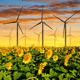 Sunflower field with wind turbines Royalty Free Stock Photos