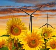 Sunflower field with wind turbines Stock Image