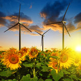 Sunflower field with wind turbines Stock Image