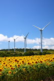 Sunflower field with windmill Stock Image