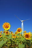 Sunflower field with windmill Royalty Free Stock Images