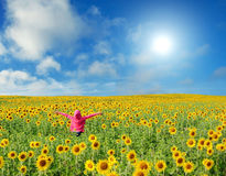 Sunflower field with young woman. Young Woman Standing in Sunflower Field stock images