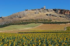 Sunflower field, Andalusia, Spain. Royalty Free Stock Photos