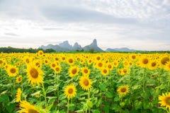 Sunflower Royalty Free Stock Image