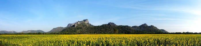 Sunflower Fields Panorama. Field of Sunflowers panorama Thailand Royalty Free Stock Photos