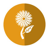 Sunflower flora leaves icon shadow Royalty Free Stock Image