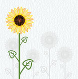 Vector sunflower floral background Stock Photography