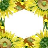 Sunflower floral botanical flowers. Watercolor background illustration set. Frame border ornament square. Sunflower floral botanical flowers. Wild spring leaf royalty free illustration