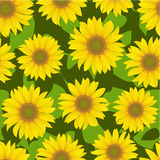 Sunflower flower seamless background Stock Images