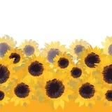 Sunflower flower seamless background Stock Photo