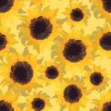 Sunflower flower seamless pattern Royalty Free Stock Photos