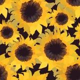 Sunflower flower seamless pattern Royalty Free Stock Photo