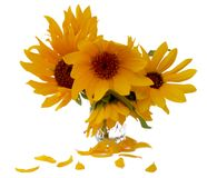 Sunflower flower in small clear glass isolated on white digital. Painting Stock Photos