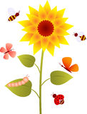 Sunflower, Flower Vector. Sunflower floral illustration with butterflies and bees and ladybug,sunflower, yellow flower, flower , lady bug, butterflies, bees Royalty Free Stock Photography