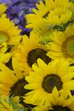 Sunflower flower with worker bee stock image