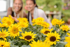 Sunflower flowerbeds in focus two woman smiling Stock Images