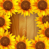 Sunflower flowers arranged in a circle on a wooden background Royalty Free Stock Image
