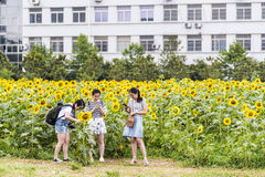 sunflower flowers and student Stock Image
