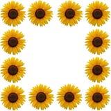 Sunflower frame vector illustration