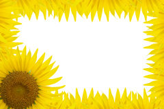 Sunflower Frame. Frame Made out of a Sunflower and petals Stock Image
