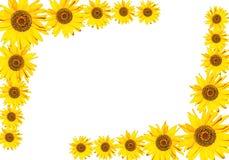 Sunflower frame Stock Photo