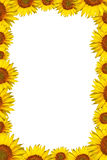 Sunflower frame. Isolated on a white background Stock Photos