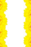 Sunflower frame Royalty Free Stock Images