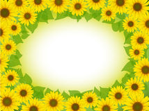 Sunflower frame. Vector yellow sunflower postcard frame background pattern Stock Photos