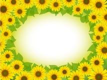 Sunflower frame Stock Photos
