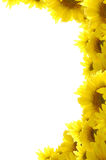 Sunflower frame Royalty Free Stock Image