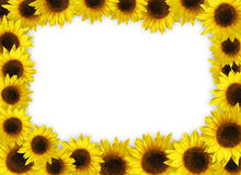 Sunflower Frame. An illustrated background of a sunflower frame Royalty Free Stock Photos