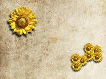 Sunflower frame. Abstract modern sunflower frame as background Stock Photos