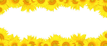 Sunflower frame Royalty Free Stock Photography