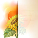 Sunflower frame background Royalty Free Stock Images