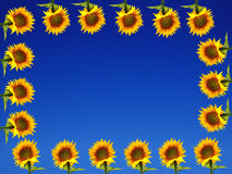Sunflower Frame on Blue Ground Royalty Free Stock Photography