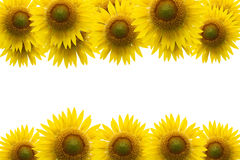 Sunflower frame on blue sky background. Royalty Free Stock Images