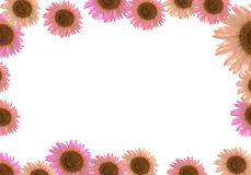 Sunflower frame border Royalty Free Stock Photography